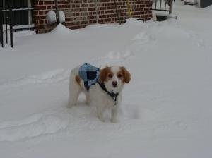 Pooch in snow